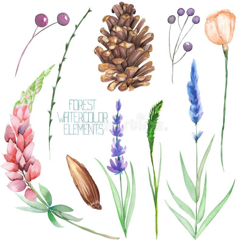 Ställ in samlingen med de isolerade vattenfärgskogbeståndsdelarna (bär, kottar, lavendel, vildblommor och filialer) royaltyfri illustrationer