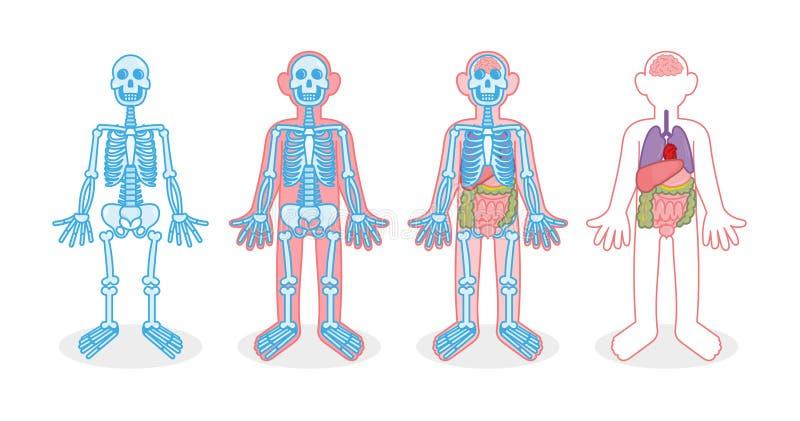 Ställ in skelett- inre organ royaltyfri illustrationer