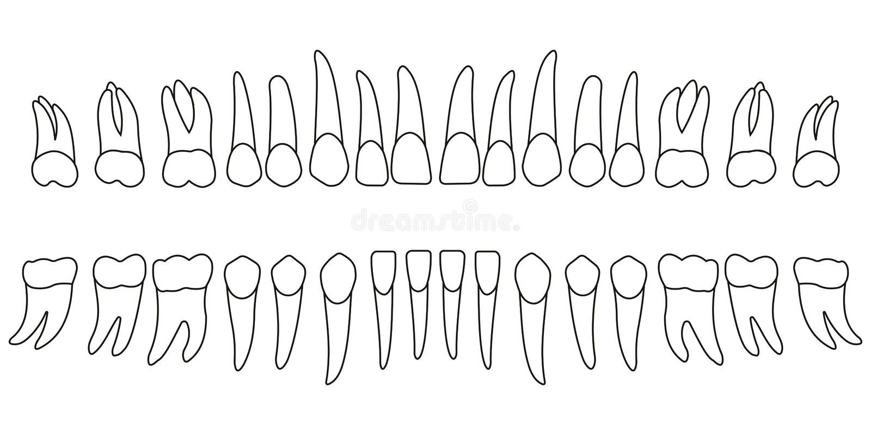 ställ in tänder vektor illustrationer