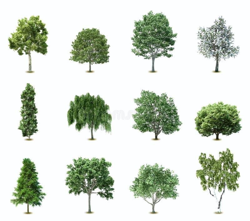 Ställ in träd. Vektor stock illustrationer