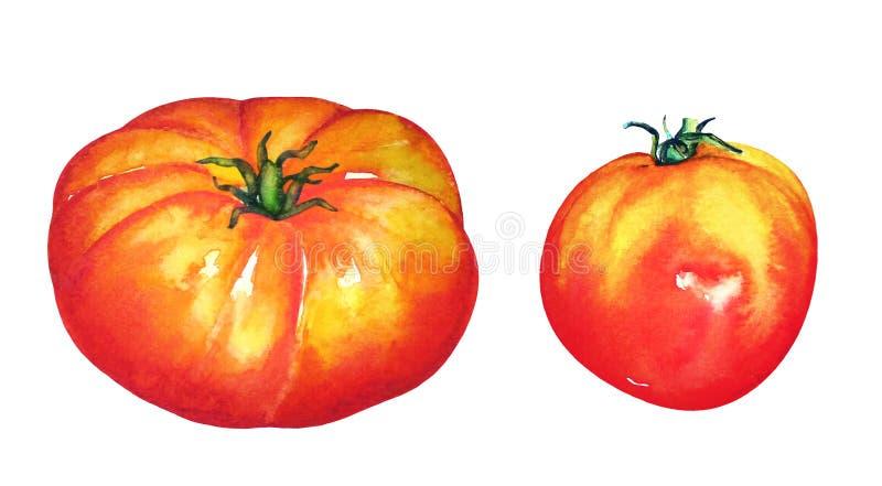 Ställ in vattenfärgen pÃ¥ tvÃ¥ röda mogna tomater fotografering för bildbyråer