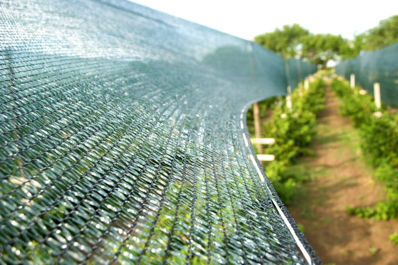 Ställa in att solbada och anti--is netto över en fruktträdgård royaltyfria bilder