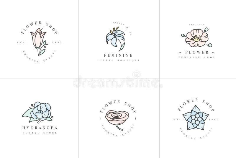 Ställde det kvinnliga tecknet för vektorn och logoer in, mallar Blom- Illustration-vanlig hortensia, ranunculus, anemon och lilja vektor illustrationer