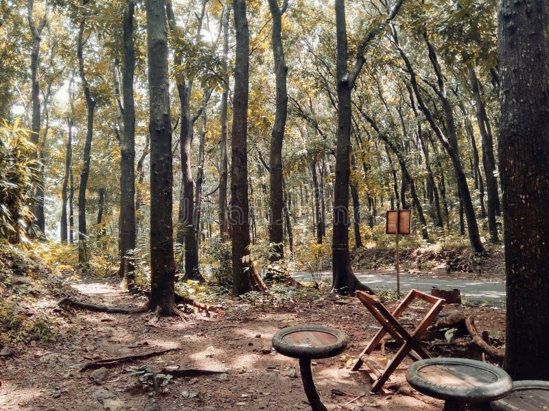 Ställe som ska kopplas av i skogen royaltyfri fotografi