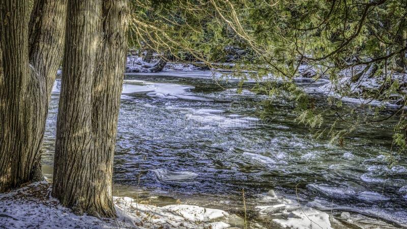 Ställning av mörka träd längs en flödande flod i vinter arkivbild