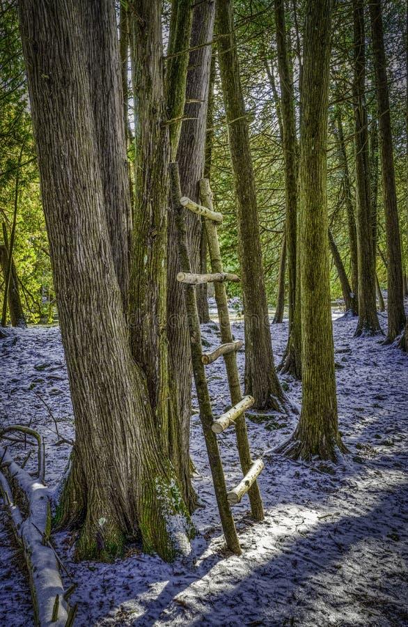 Ställning av mörka träd med en hemlagad stege royaltyfri foto