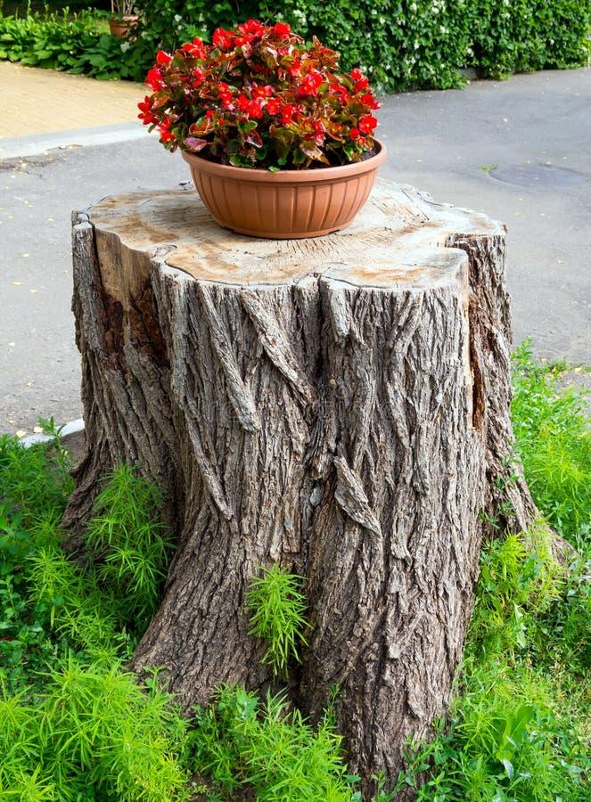 Ställning för en blomkruka som göras av trädstubbe royaltyfri foto