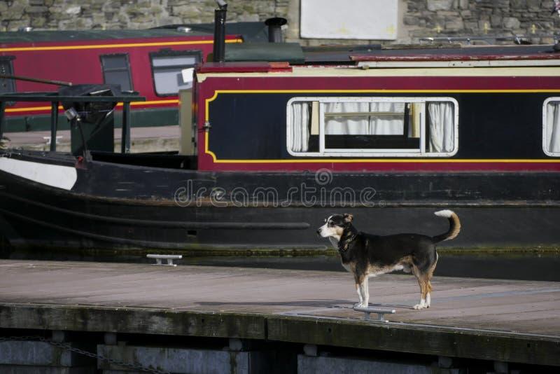 Ställningar för en älsklings- hund på kanalskeppsdockan med kanalpråm och husfartyg arkivfoton