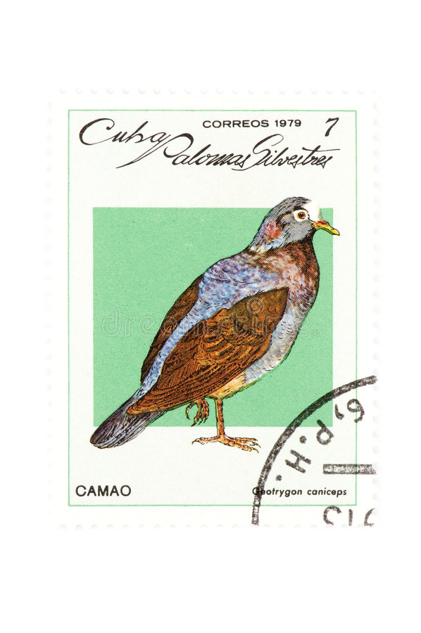stämpel för fågelcloseupporto arkivbild