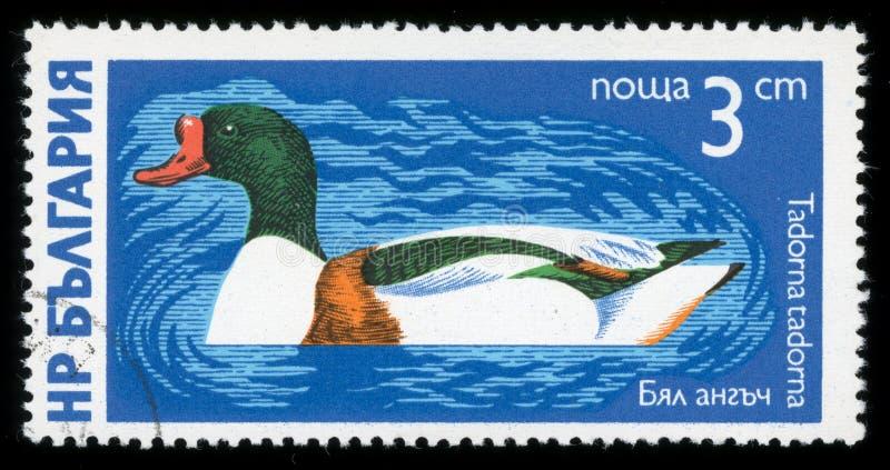 Stämpel för porto för serie för ` för Bulgarien`-vattenfågel, 1976 royaltyfri fotografi