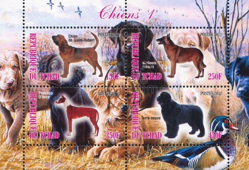 Stämpelhundkapplöpning royaltyfri foto