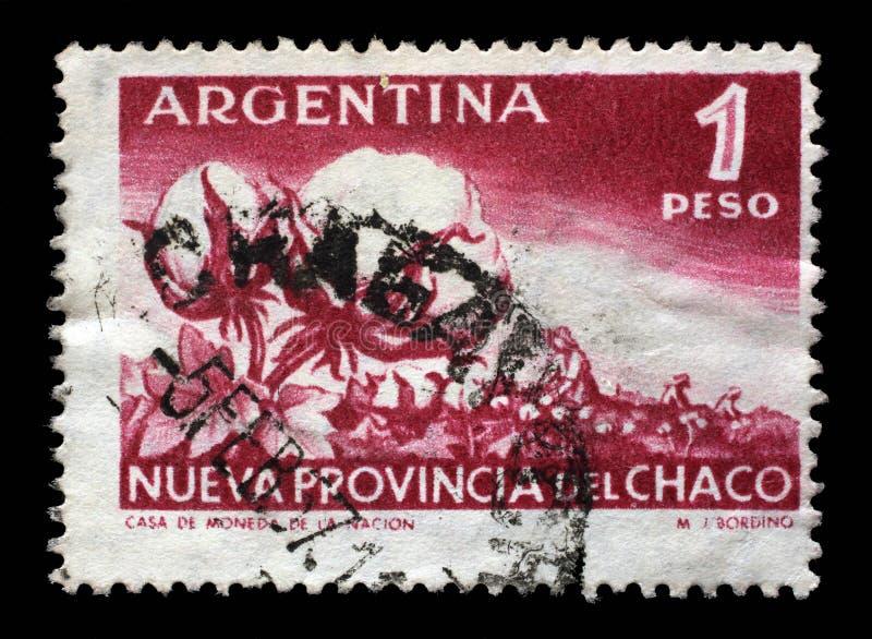 Stämpeln som skrivs ut i Argentina, visar den bomullsväxten och skörden royaltyfria bilder