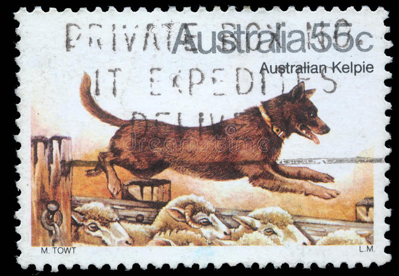 Stämpeln som skrivs ut i Australien, visar den australiska Kelpiehunden fotografering för bildbyråer