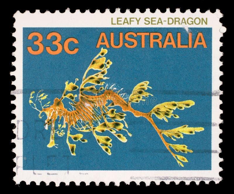 Stämpeln som skrivs ut i Australien, visar lövrika Seadragon, Phycodurus Eques, Marine Fish royaltyfria foton