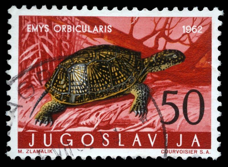 Stämpeln som skrivs ut i Jugoslavien, visar den europeiska dammsköldpaddan arkivfoton