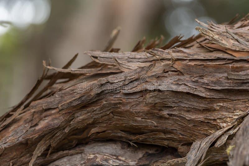 Stäng en trädgren med bark arkivbilder
