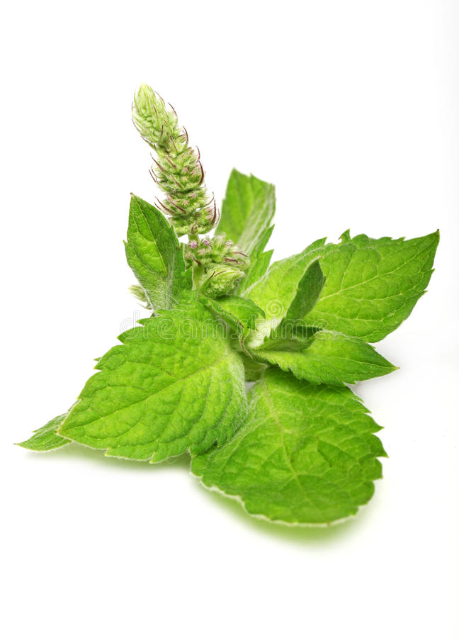 stäng nya leaves mint upp royaltyfria foton