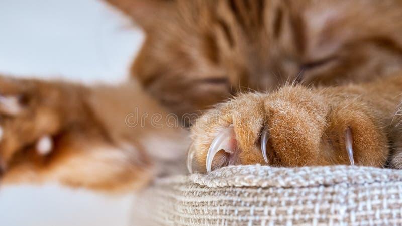 St?ng sig av stora jordluckrare som ?r synliga p? en av framdelen, tafsar upp av en stor orange katt som sover p? en stol royaltyfria bilder