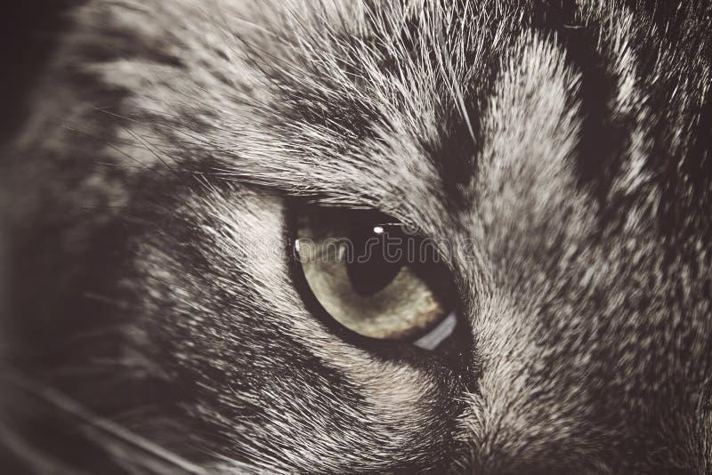 Stäng sig upp av öga för inhemsk katt arkivfoton