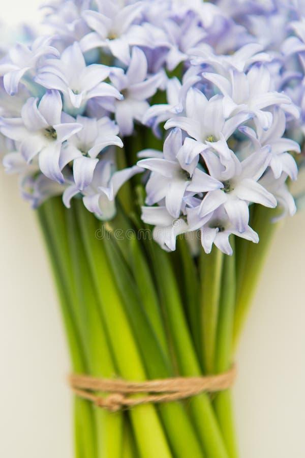 Stäng sig upp av blåa vårblommahyacinter på en vit bakgrund fotografering för bildbyråer