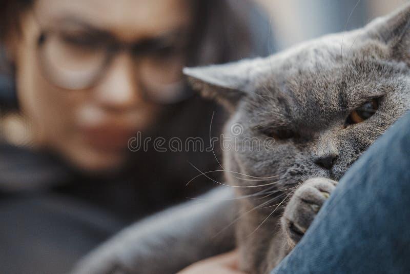 Stäng sig upp av den sluga katten som försöker att stjäla och äta kakan, medan hans ägare är bort royaltyfri foto