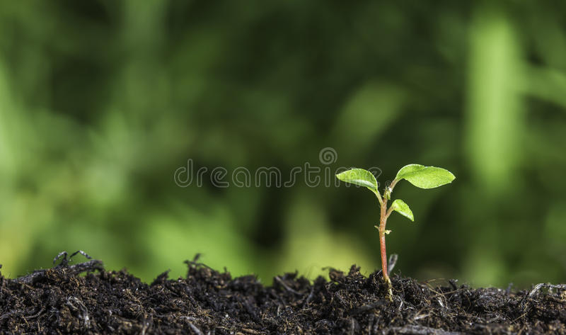 Stäng sig upp av den unga växten som spirar från jordningen med grön bokehbakgrund royaltyfria foton