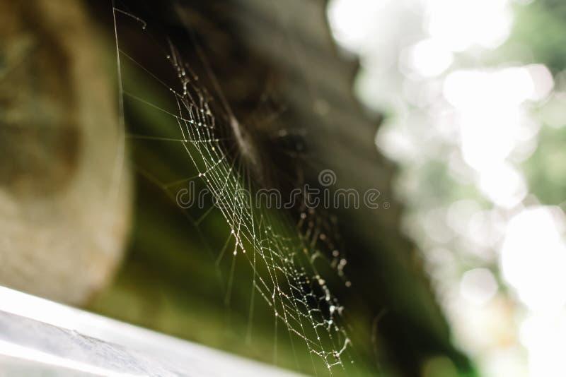 Stäng sig upp av en spiderweb med droppar av dagg arkivfoton