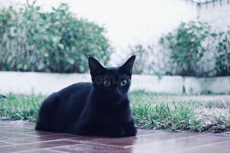 Stäng sig upp av en svart katt på gräset i bakgården royaltyfri bild