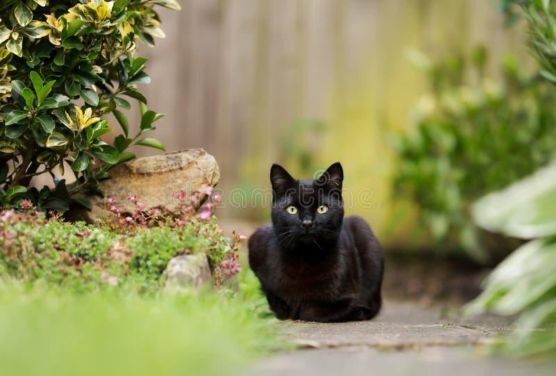 Stäng sig upp av en svart katt som ligger i trädgården arkivbilder
