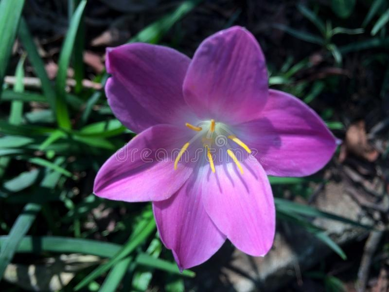 Stäng sig upp av en violett blomma royaltyfria foton