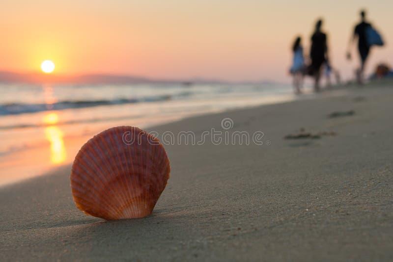 Stäng sig upp av ett snäckskal, medan folket lämnar stranden arkivfoton