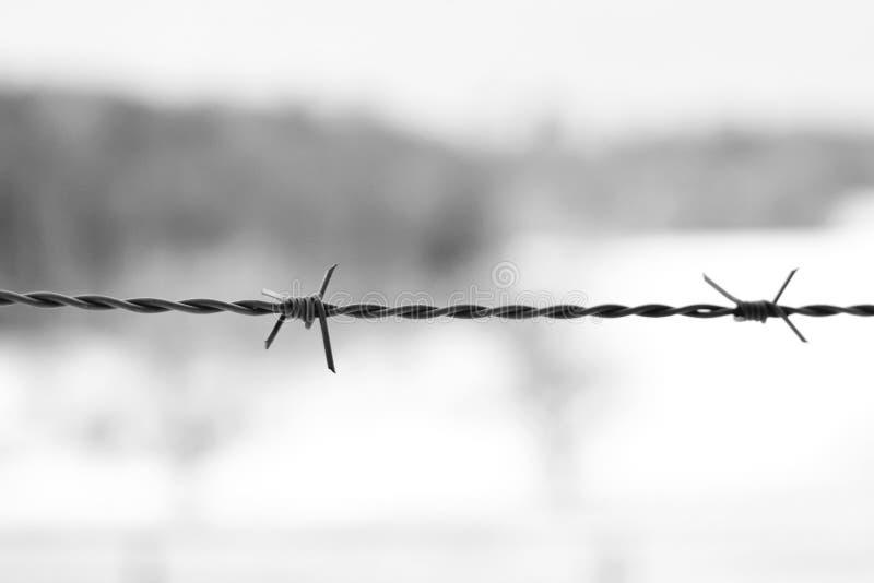 Stäng sig upp av ett taggtrådstaket på oskarp bakgrund royaltyfri bild