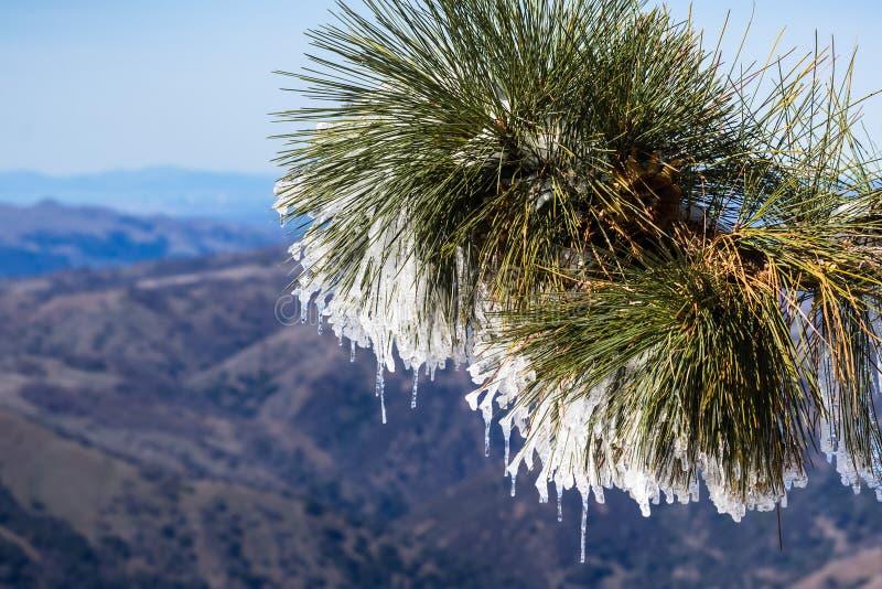 Stäng sig upp av fryst sörjer visare på en kall vinterdag överst av Mt Hamilton, San Francisco Bay område i bakgrunden, San Jose, arkivbilder