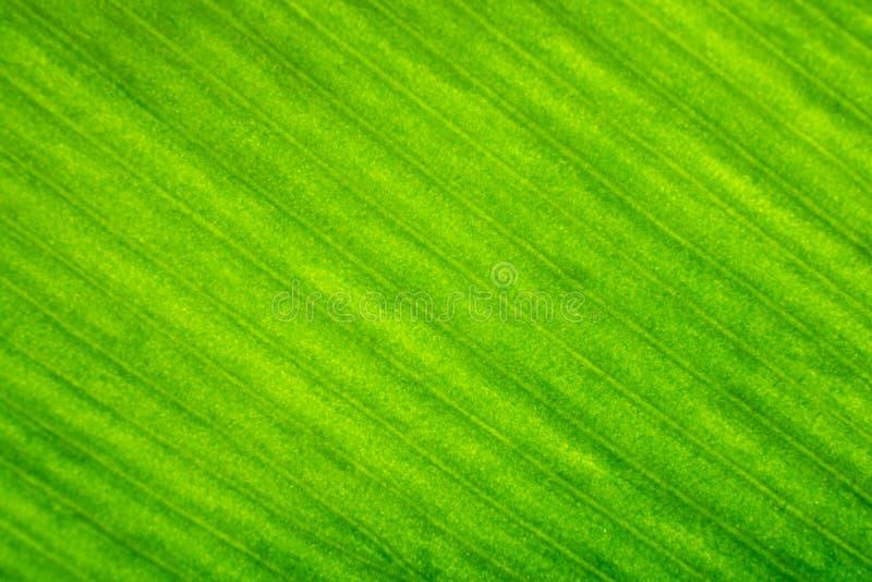 Stäng sig upp av grön trädbladtextur royaltyfri fotografi