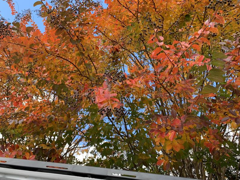 Stäng sig upp av gröna, gula, röda och rosa träd i nedgången arkivfoton