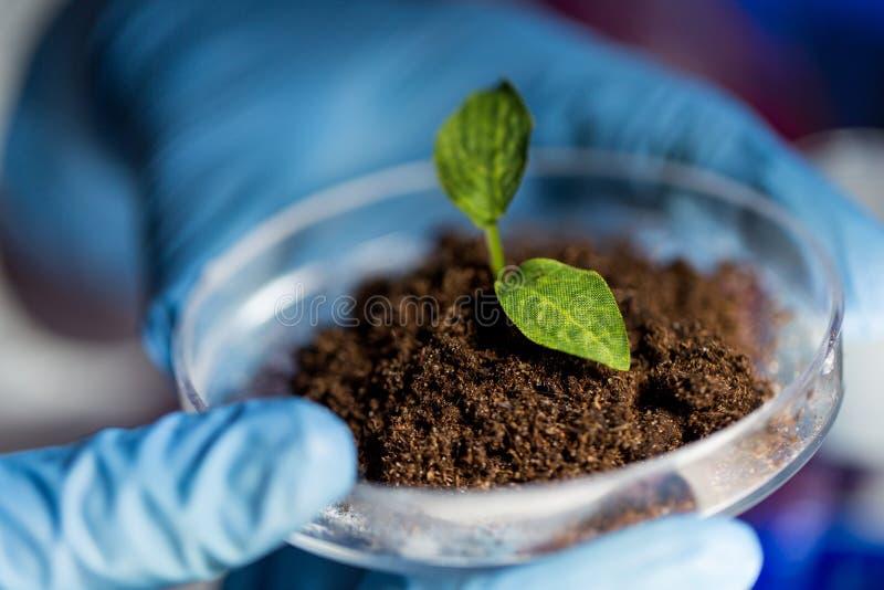 Stäng sig upp av händer med växten och jord i labb arkivfoto