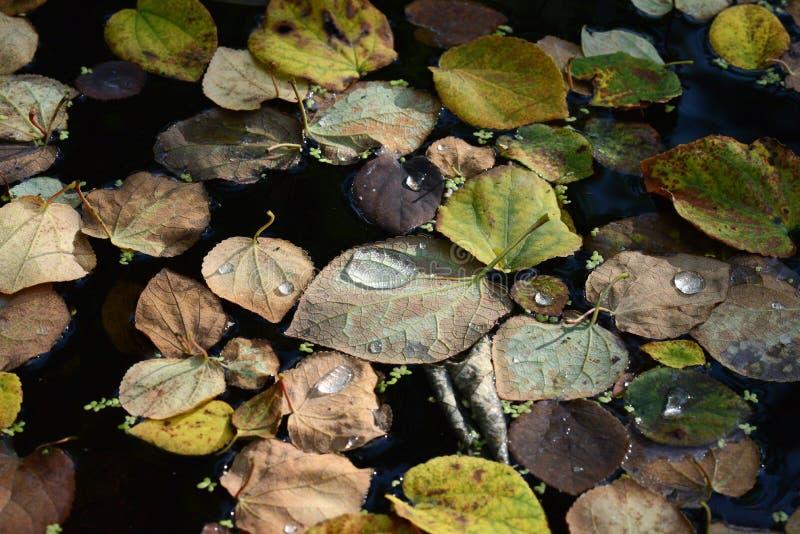 Stäng sig upp av höstsidor i sjön i Valbyparken, Köpenhamn royaltyfri bild