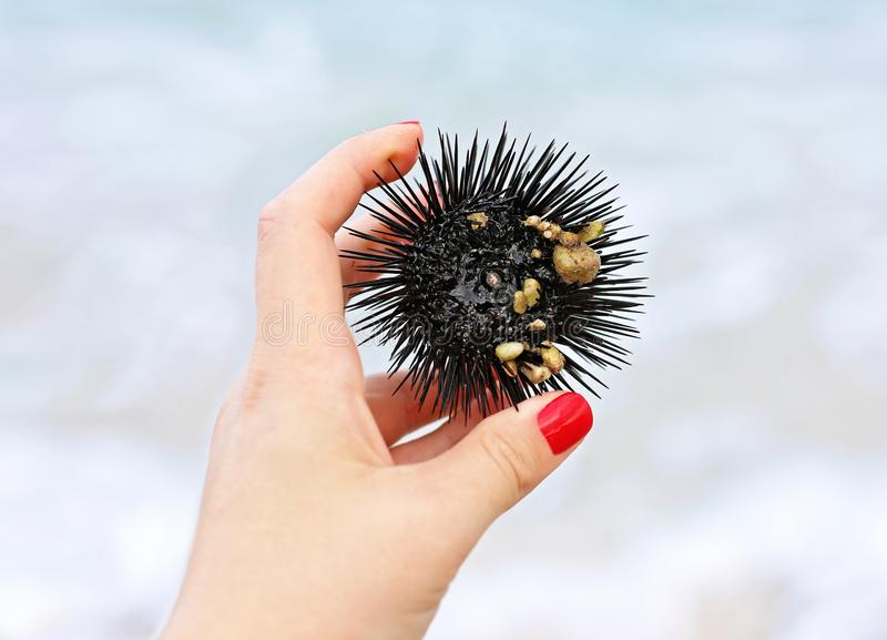 Stäng sig upp av kvinnahanden som rymmer en Black Sea gatubarn på stranden royaltyfria bilder