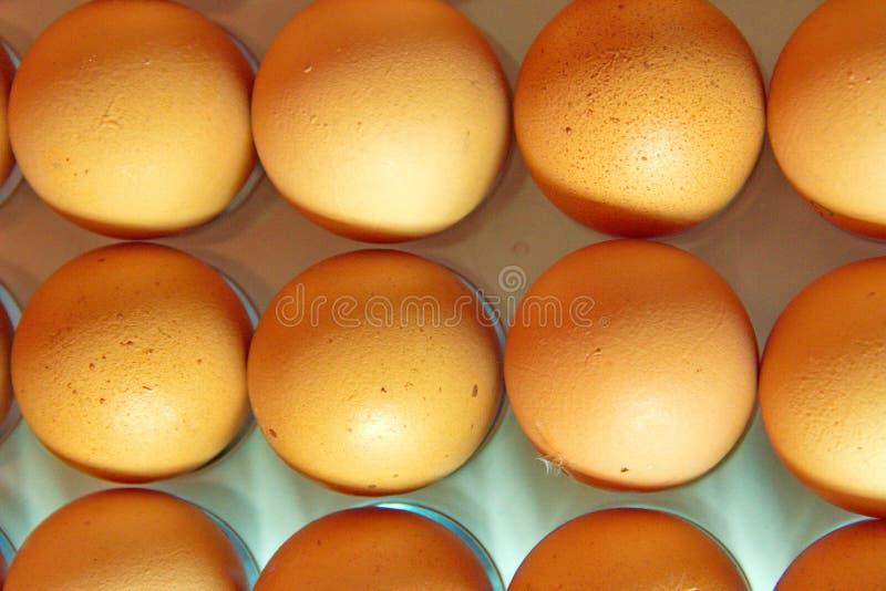 Stäng sig upp av många ägg i rad, plansikten arkivbilder