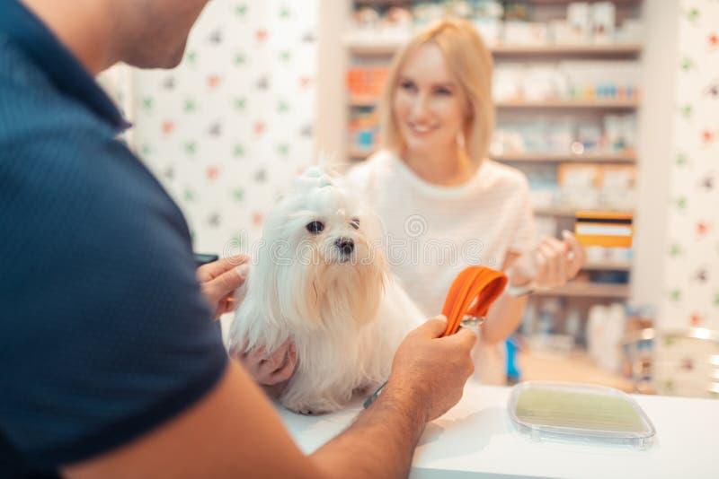 Stäng sig upp av mannen som köper orange hundledning för den vita fluffiga hunden royaltyfri bild