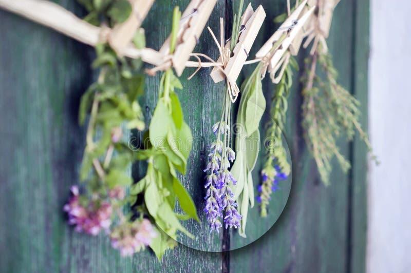 Stäng sig upp av medelhavs- örtbuketter, vis man, basilika, lavendel, timjan på lantlig grön trätabellbakgrund som hänger med trä fotografering för bildbyråer