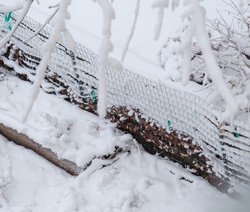 Stäng sig upp av ny snöbeläggning och att varva på trädgårdtrådstaketet royaltyfri fotografi