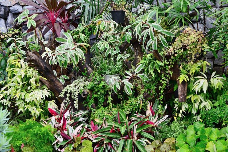 Stäng sig upp av olika dekorativa växter royaltyfri foto