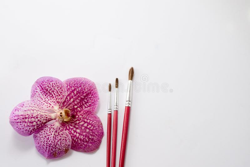 Stäng sig upp av röda målarfärgborstar med den rosa blomman som isoleras på vit bakgrund tabell för målarfärg text arkivbild