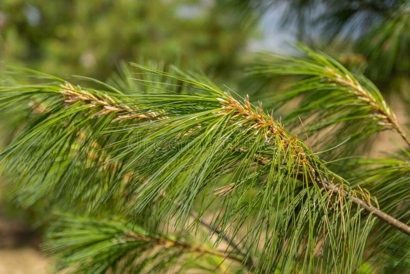 Stäng sig upp av suddiga gröna filialer och sörja trädvisare i natur arkivfoto