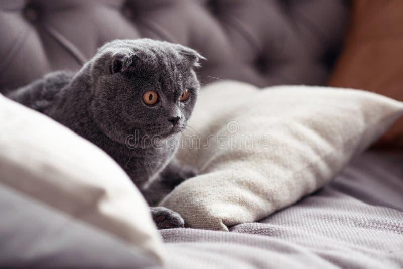 Stäng sig upp av trevlig liten grå kattunge på soffan royaltyfria bilder