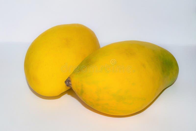Stäng sig upp av två nya mogna mango royaltyfri foto