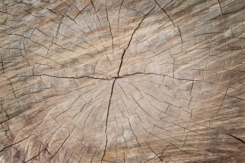 Stäng sig upp avsnitt av den gamla trädstubben, trätextur för bakgrund och designkonstarbete royaltyfria bilder