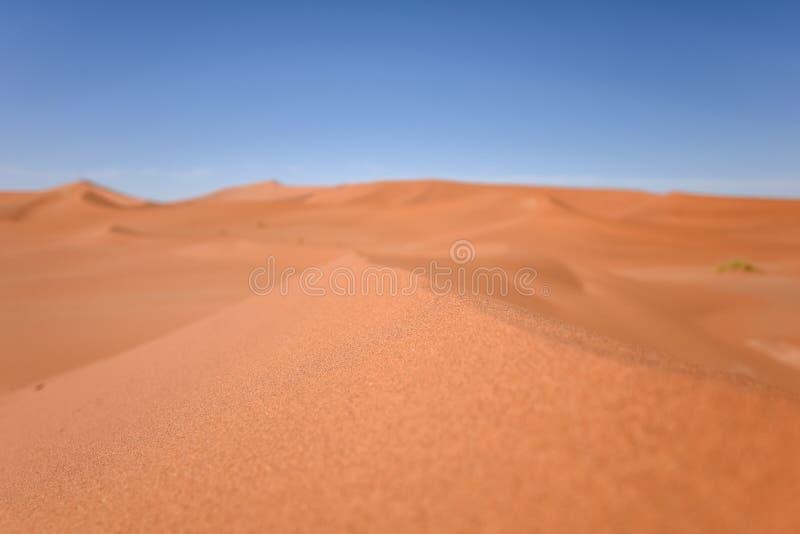 Stäng sig upp detaljen av en röd sanddyn i Sossusvlei nära Sesriem i den berömda Namib öknen i Namibia, Afrika Selektiv fokus på  arkivbilder