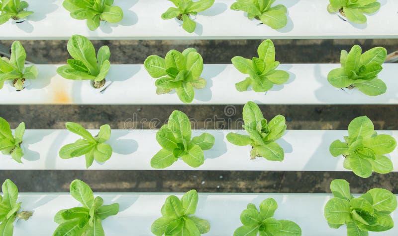 Stäng sig upp i grönsakträdgård under begrepp för bakgrund för mat för morgontid med kopieringsutrymme royaltyfri fotografi